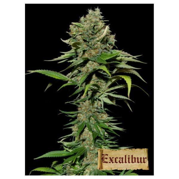 Excalibur 6+2