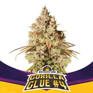 Gorilla Glue No-4