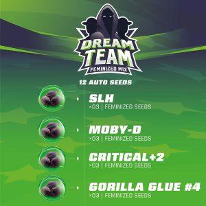 Dream Team Feminized Mix
