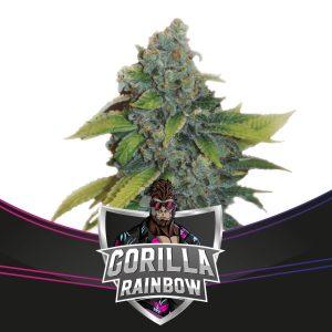 Gorilla Rainbow